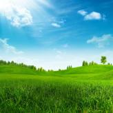 environmental shot