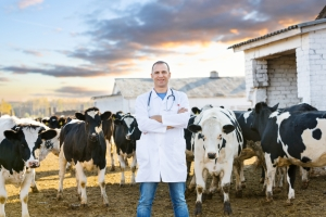 dairy hoof health